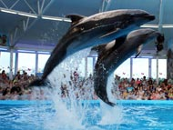 Дельфины как подарок