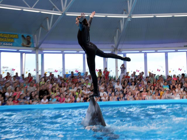 Дельфинарий в подарок