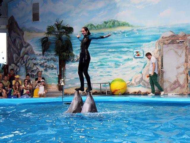 Выступление дельфинов перед детьми
